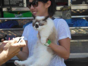 Feline Festival Pretty Cat_edited-1