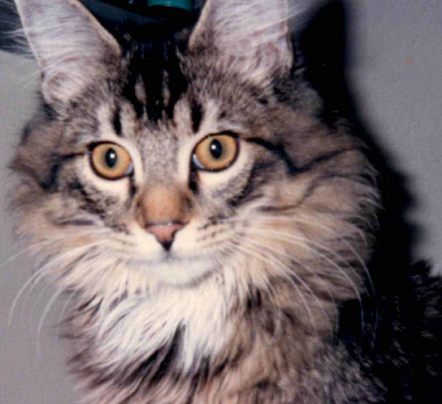 Cats Eyes Change Color Kittens' Eyes Change Color